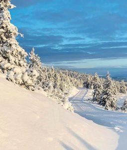 Slik velger du riktige ski